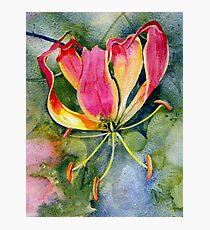 Gloriosa Lily Photographic Print