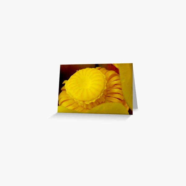 Yellow Pond Lily  Greeting Card