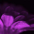 Purple jems by Kimberley Davitt