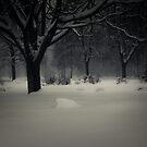Trees and snow by trbrg