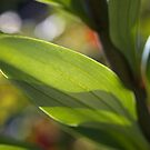 Lily Her Leaf by Joy Watson
