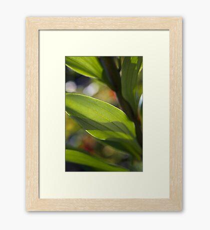 Lily Her Leaf Framed Print