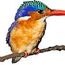 Malachite kingfisher by BlaizerB