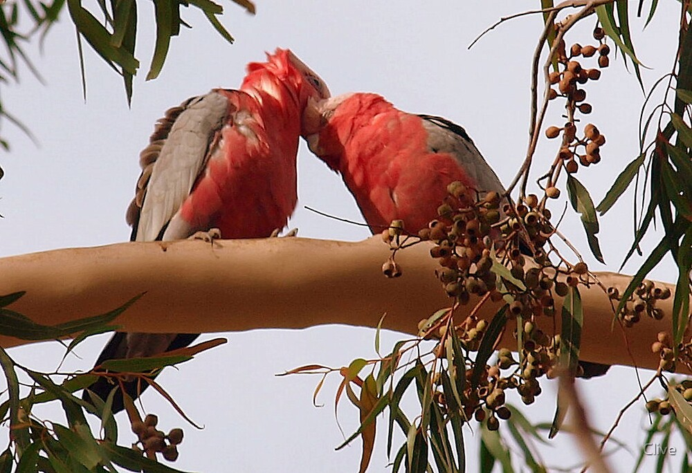 True Love by Clive