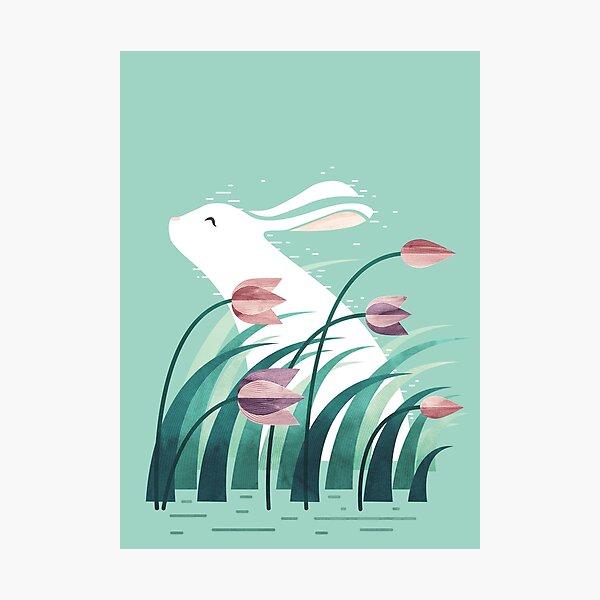Rabbit, Resting Photographic Print