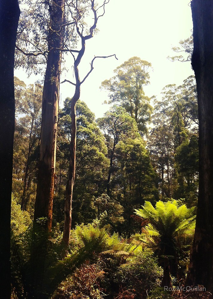 Trees and Ferns, Olinda by Roz McQuillan