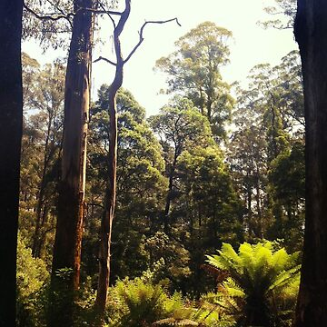 Trees and Ferns, Olinda by rozmcq