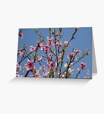 Apricot tree Greeting Card
