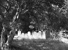 Newtown Cemetery by John Douglas