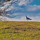 All Alone at the Top of the Hill by TJ Baccari Photography