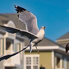Seagull Goes For the Bread by TJ Baccari Photography