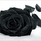 Black Rose by Angelique Brunas