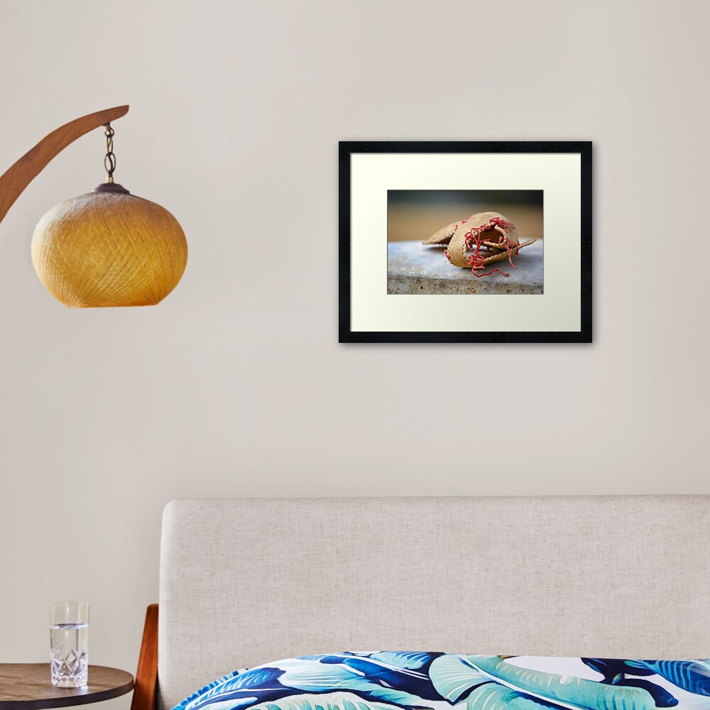 Shell of Dreams Framed Art Print