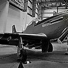 AZ Mustang by Bob Moore