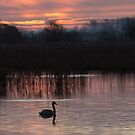 Somerset levels by Stephen Liptrot