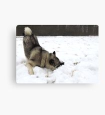 Cold Fluffy Pillow  Canvas Print