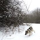 Snow Bend by CreativeEm