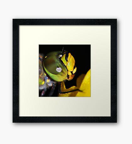 Dragonfly Head At Night Framed Print