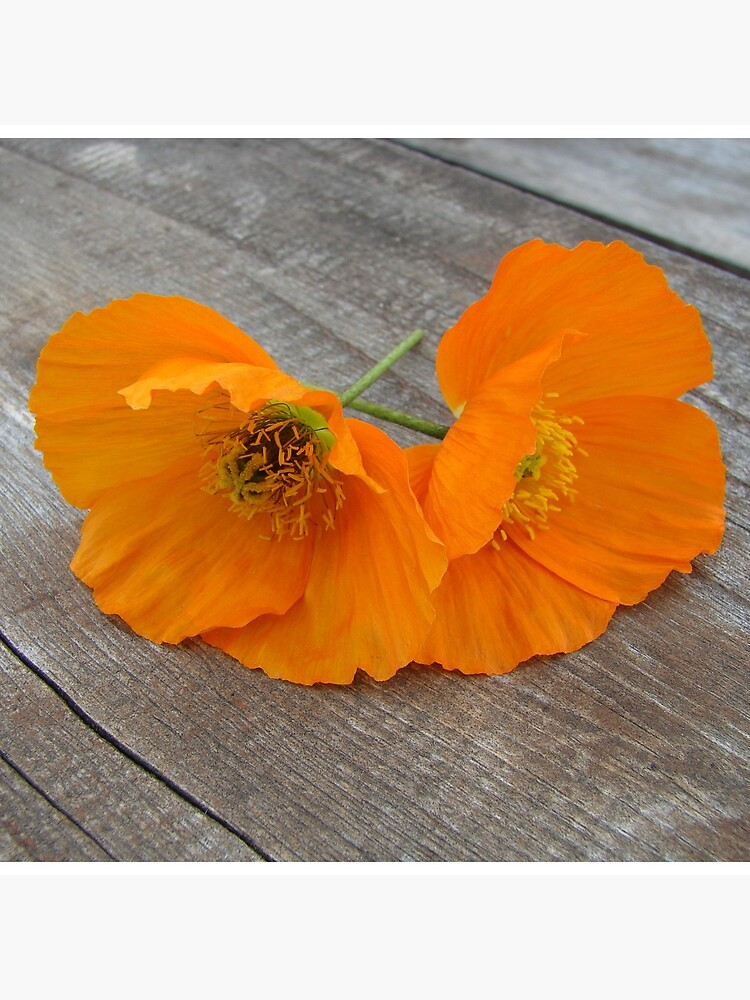 Orange flowers on a wooden table by svehex