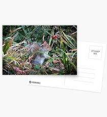 Woodland wanderer Postcards
