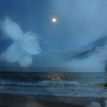 Dreams by Evita
