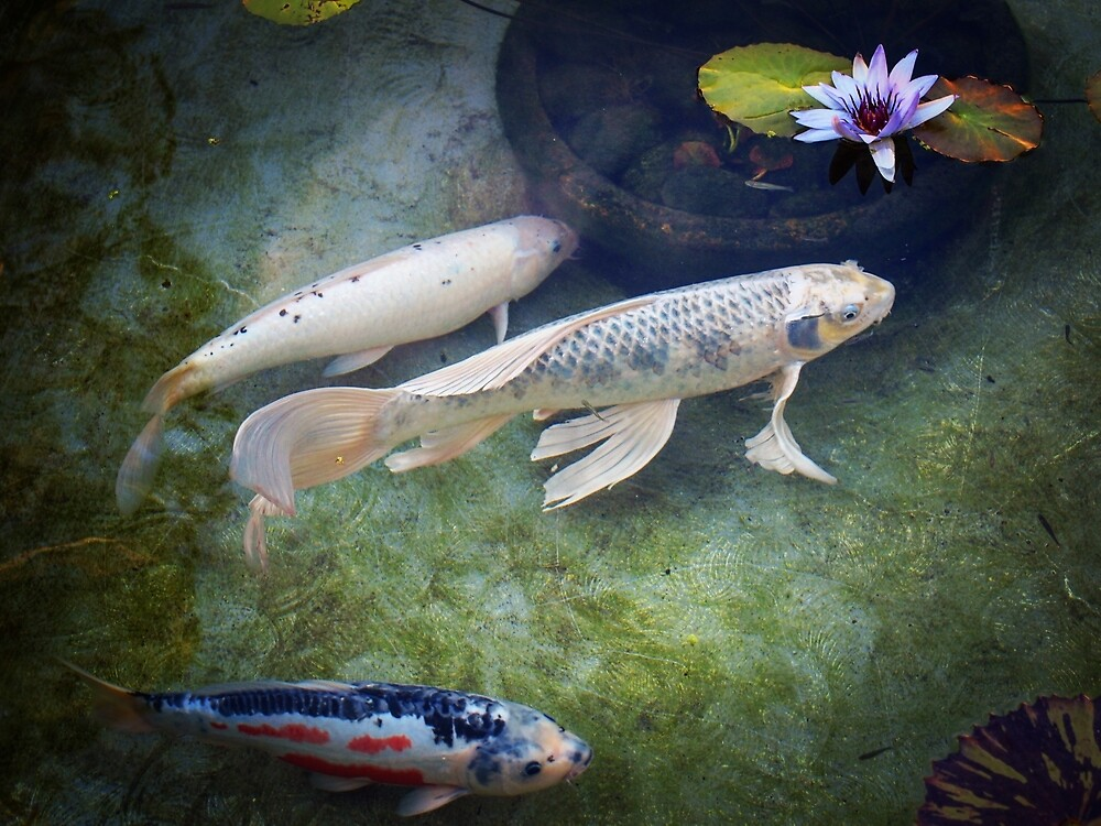 At The Koi Pond... by Douglas E.  Welch