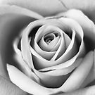 Rose in black and white by fita