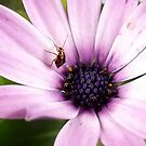 Insect and flower by fita