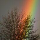Rainbow Dark by Jennifer Vickers