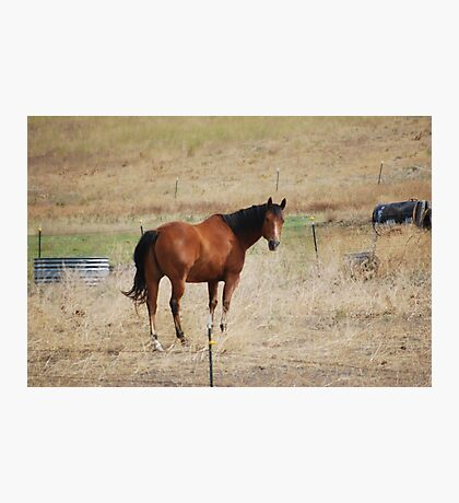 Looking Horse Photographic Print