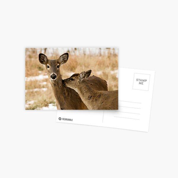 Two deers   Postcard