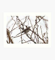 Mockingbird in the trees Art Print