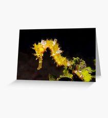 Thorny Seahorse (Hippocampus histrix) Greeting Card