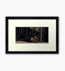 Victorian Bushfires Framed Print