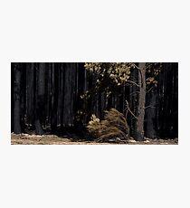 Victorian Bushfires Photographic Print