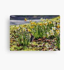 Easter Bunny in the Spring Daffodils Canvas Print