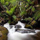 First Creek by Travis Easton