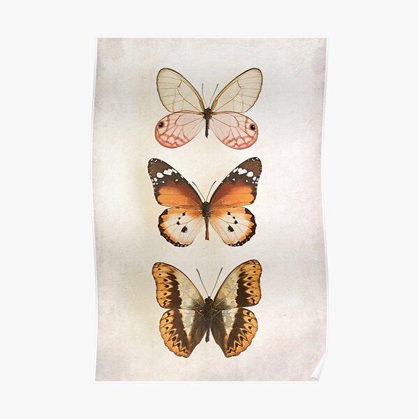 Three Vintage Butterflies Poster