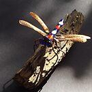 Dragonfly by Alex Gardiner