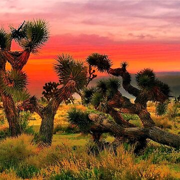 Joshua Trees  by LudaNayvelt