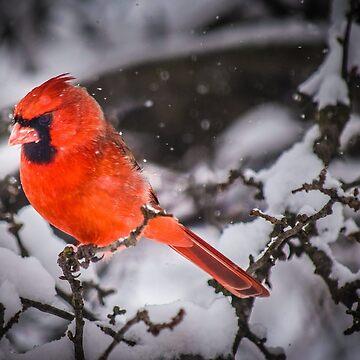 Snowy Cardinal by LittleRedLens