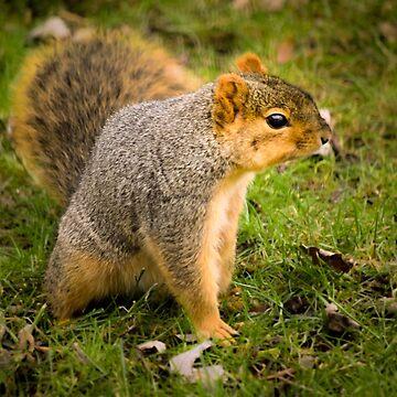 Squirrel friend by LittleRedLens