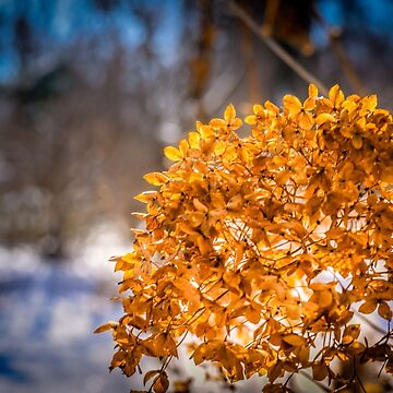 Glow as Dry by LittleRedLens