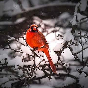 Pop of color in a Blizzard by LittleRedLens