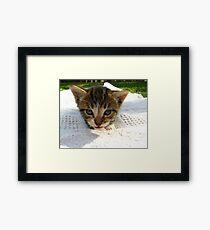 cute kitten Framed Print