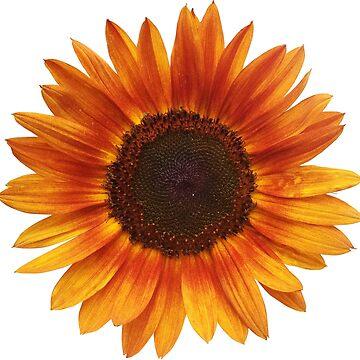 sunflower red by SKETSIE