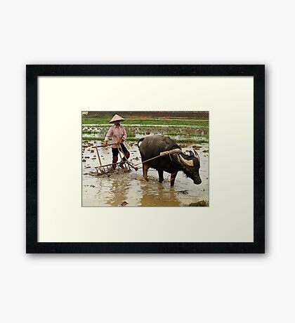 Preparing the fields for the rice crop - North Vietnam Framed Print