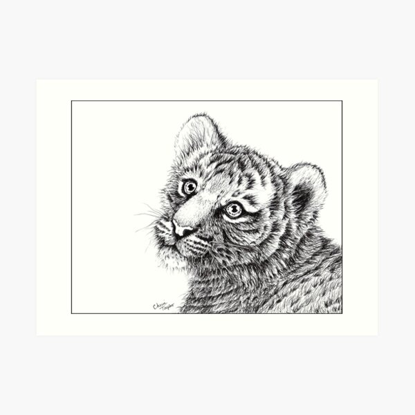 Tiger Cub Drawing Art Print