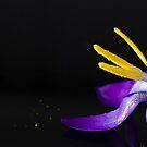 Flowers by Svetlana Sewell