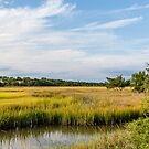 Wetland Marshes by dbvirago